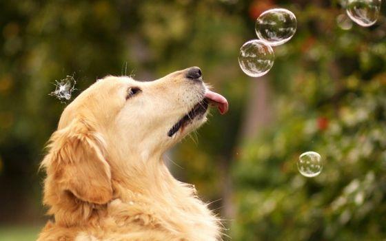 Заставки пузыри, собака, смешное