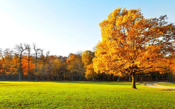 Фото бесплатно осень, красиво, сад