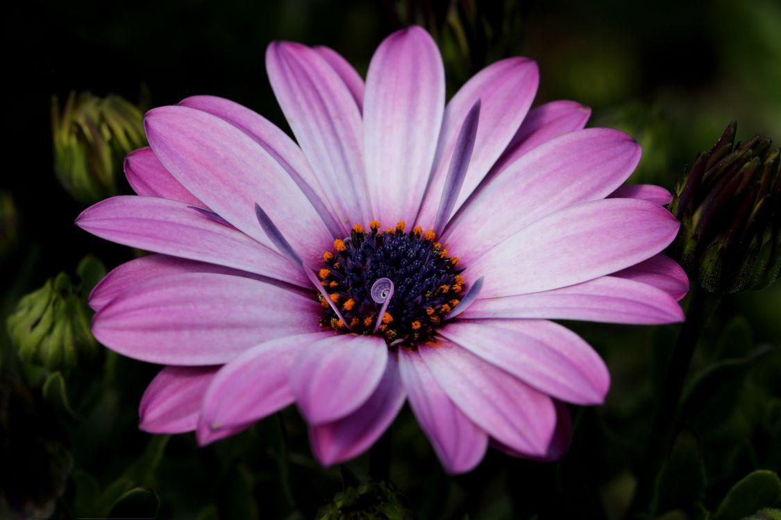 Фото цветы фиолетовый макросъемка - бесплатные картинки на Fonwall