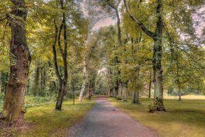 Фото бесплатно лес, парк, дорога