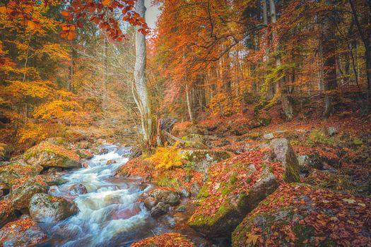 Заставки осенние листья, осень, поле