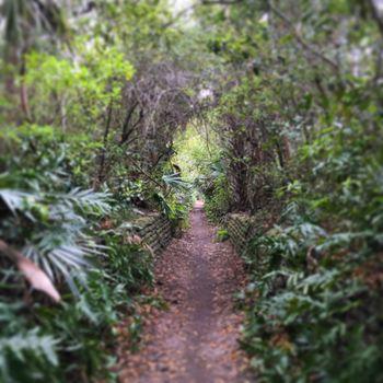 Фото бесплатно путь, листва, растения