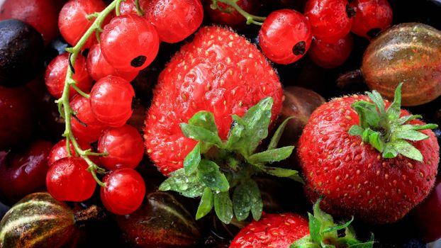 Photo free strawberries, currants, gooseberries