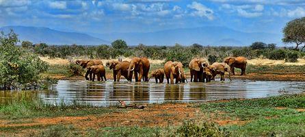 Фото бесплатно слон, Сафари, ранчо