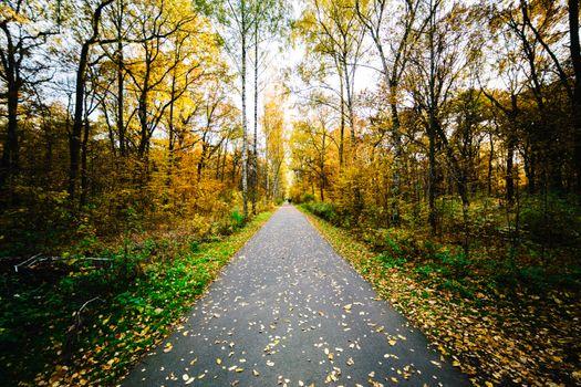 Photo free autumn, morning, path