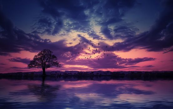 Photo free the sunset, the sea, a lone tree