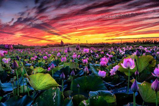 Фото бесплатно закат, водоём, цветы