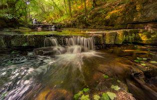 Фото бесплатно растения, леса, скалы