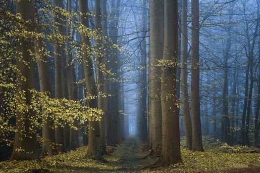 Photo free autumn, morning, forest