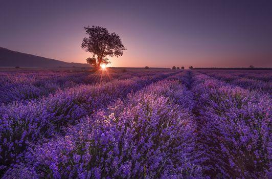 Photo free lavender field, field, landscape