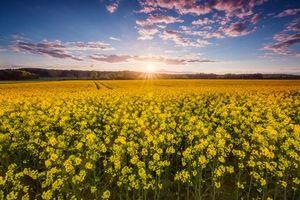 Бесплатные фото закат, поле, цветы, пейзаж