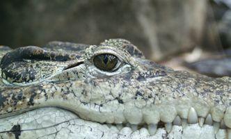 Фото бесплатно животное, дикая природа, рептилия