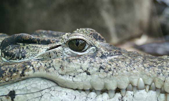Photo free animal, wildlife, reptile
