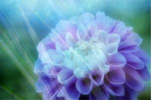 Фото бесплатно оригинальный, цветочный, красочный