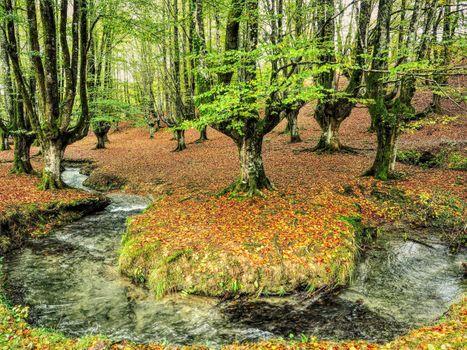 Фото бесплатно Лес Отзаретта, Испания, Otzarreta деревья