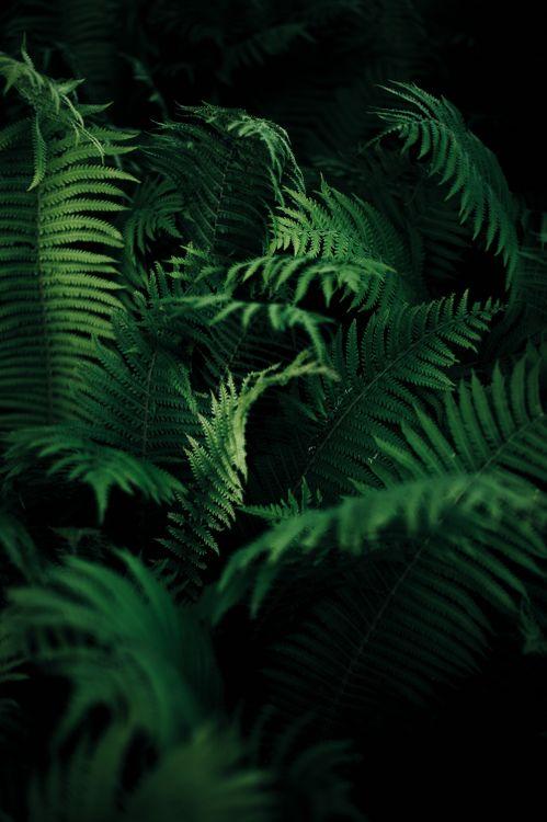 Free photo nature, ferns, plants - to desktop
