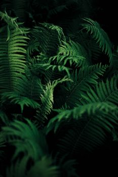 Photo free nature, ferns, plants