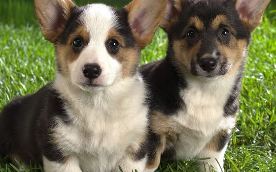 Photo free dog, couple, puppies