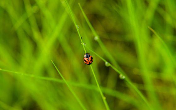 Фото бесплатно божья коровка, насекомые, растения