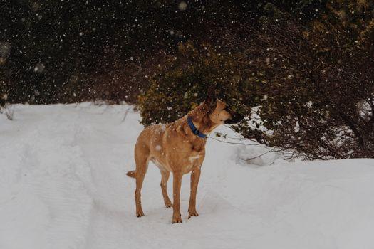 Photo free free images, snow, pet