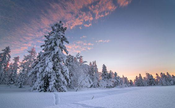 Фото бесплатно пейзаж, лес, сугробы