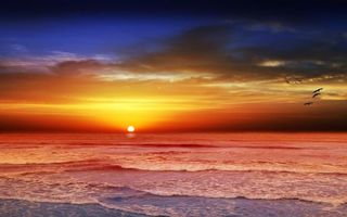Бесплатные фото закат,море,волны,берег,птицы,пейзаж