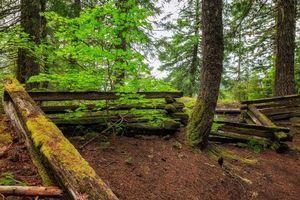 Бесплатные фото лес,деревья,забор,природа