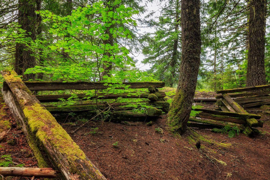Фото бесплатно лес, деревья, забор - на рабочий стол