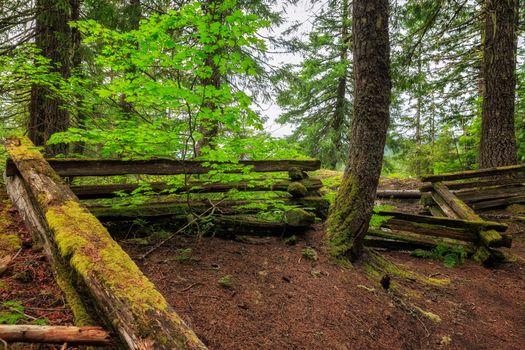 Фото бесплатно лес, деревья, забор