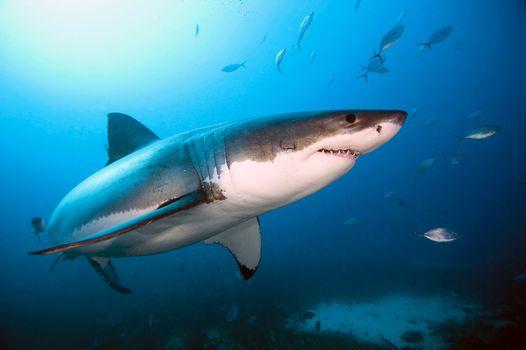 Фото бесплатно синий фон, море, жители море