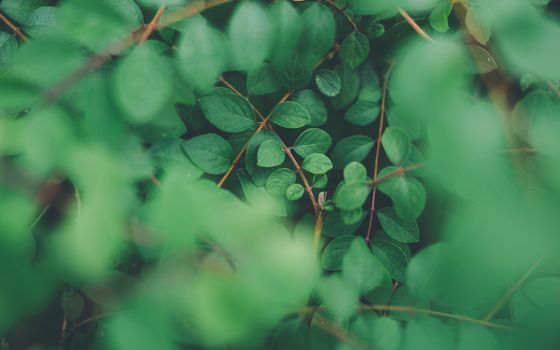 Photo free nature, green leaves, branches
