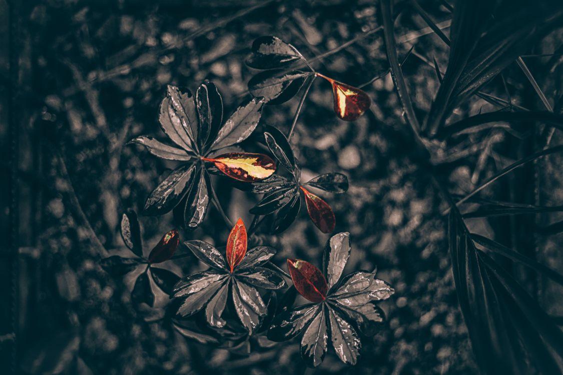 Засохшие листья · бесплатное фото