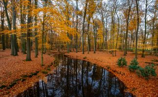 Бесплатные фото осень,речка,лес,деревья,пейзаж