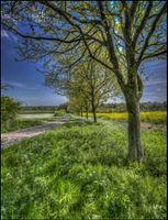 Фото бесплатно поле, дорога, деревья, пейзаж