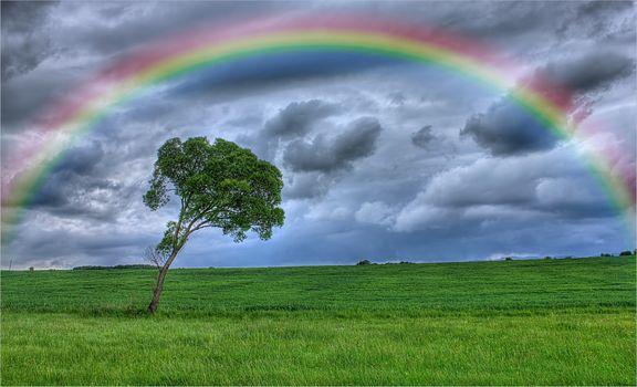 Фото бесплатно поле, радуга, небо