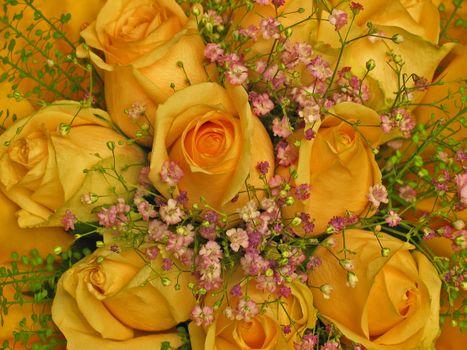 Golden roses · free photo