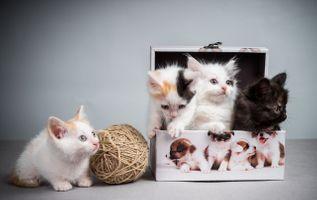 Бесплатные фото коробка,клубок,котята,котёнок,пушистики,жомашние животные,маленькие котята