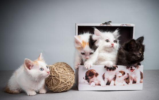 Фото бесплатно коробка, клубок, котята
