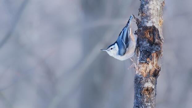 Photo free beak, birds, nuthatch