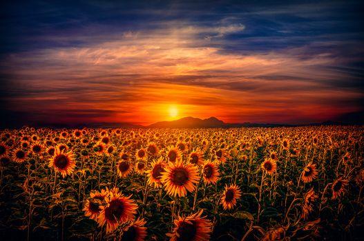 Фото бесплатно на открытом воздухе, закат, поле