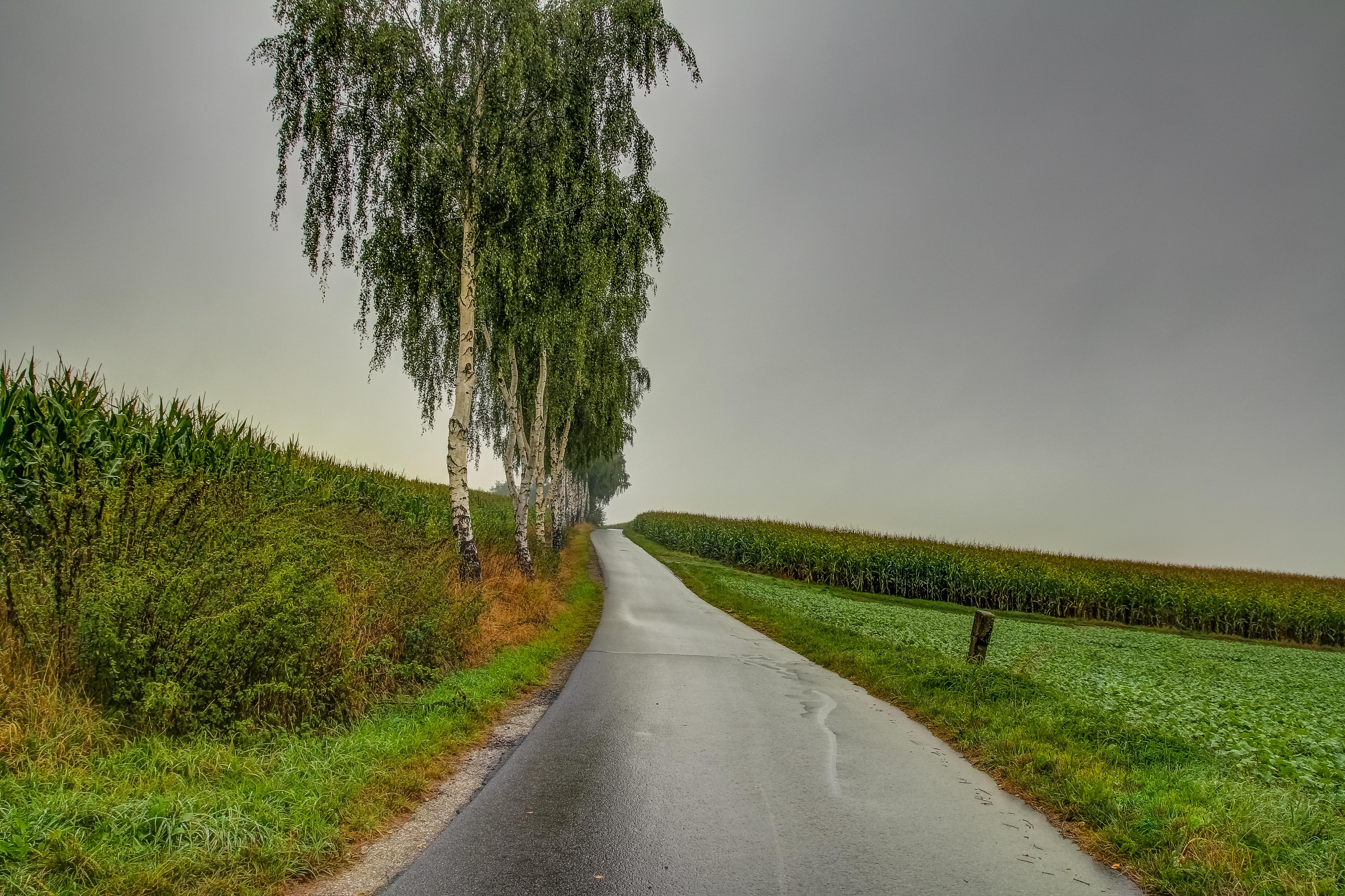 Обои поле, дорога, деревья, тучи