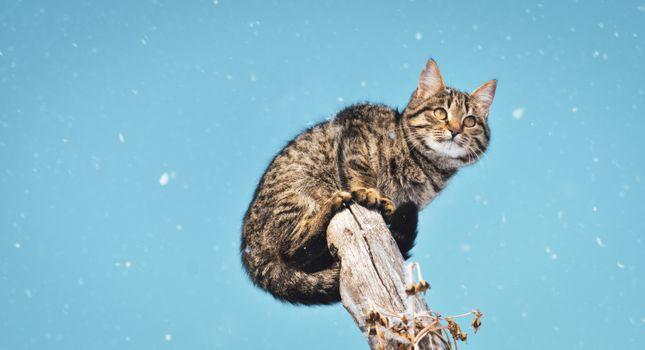 Заставки милый кот, снег, дерево