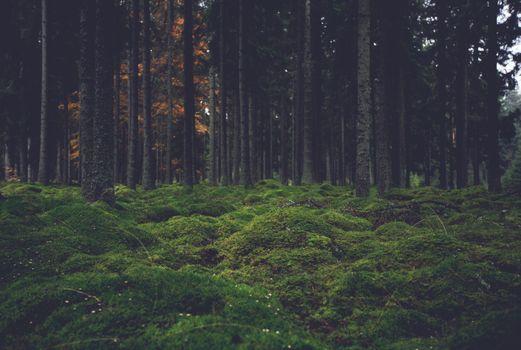 Фото бесплатно деревья, растения, кустарник