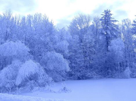 Фото бесплатно замороженные деревья, зима, снег