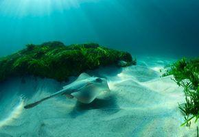 Фото бесплатно Море, морское дно, скат