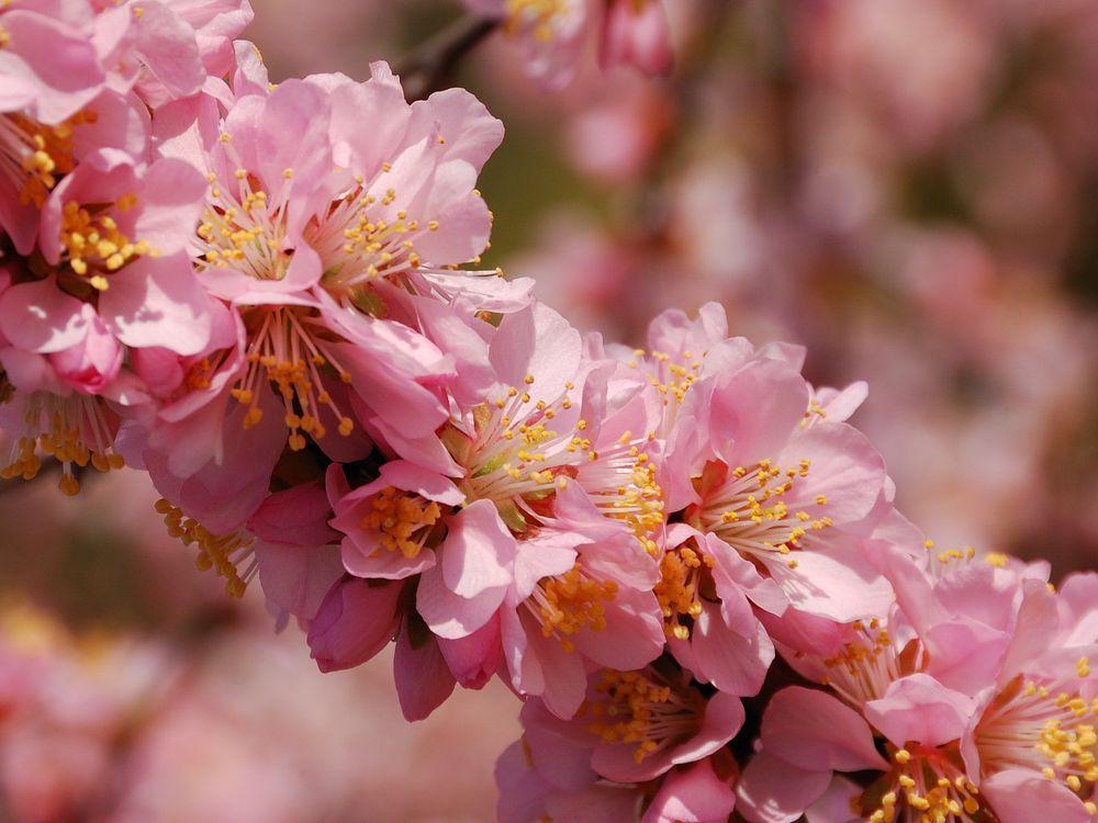 цветущая ветка · бесплатное фото