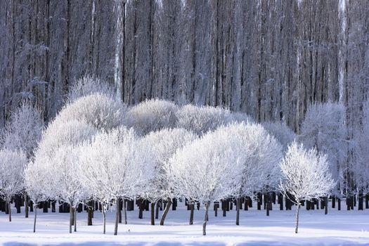 Фото бесплатно древесное растение, природа, дерево