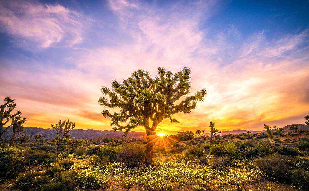 Фото бесплатно Национальный парк, Joshua Tree, пустыня, деревья, закат, пейзаж, пейзажи
