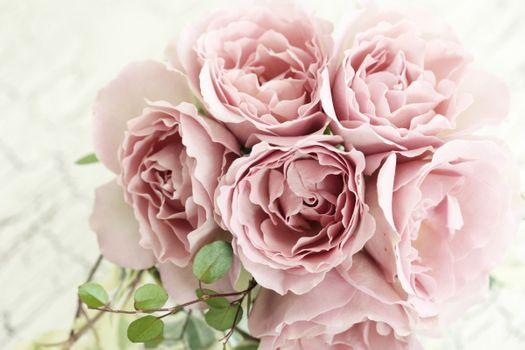 Фото бесплатно розовый, розы, роза