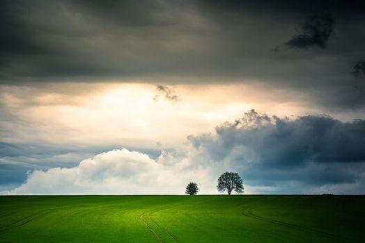 Фото бесплатно поле, тучи, деревья